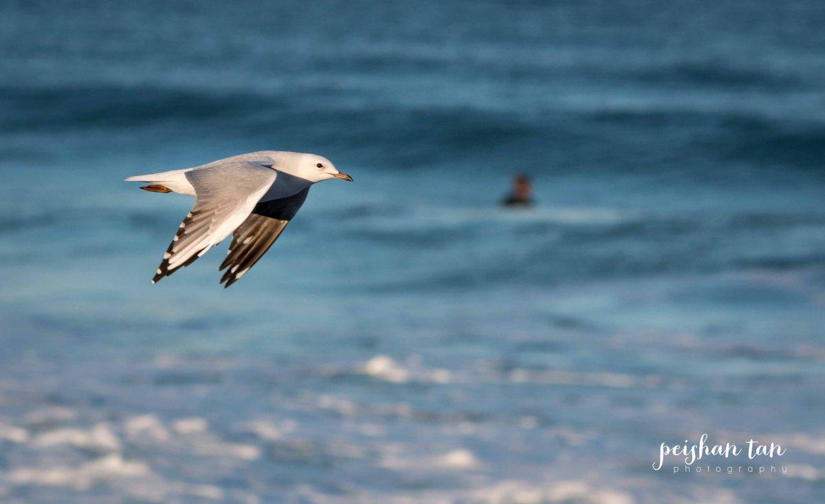 Narrabeen Beach Surfing-7