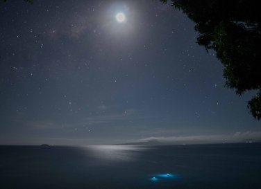 Spearfishermen at night