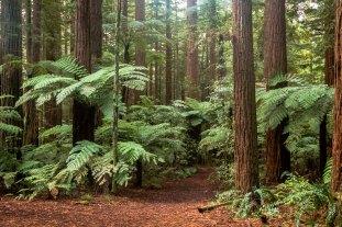 North Island New Zealand April 2016-32