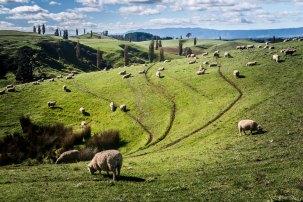 North Island New Zealand April 2016-42