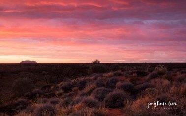 Uluru Outback--2