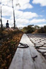 day-2-overland-track11