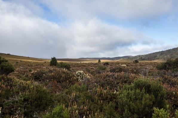 day-3-overland-track1