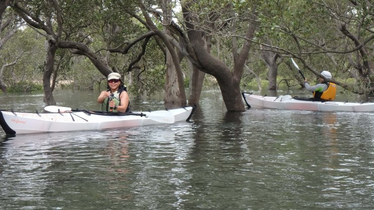 Exploring the mangroves in Currambene Creek, Jervis Bay (photo credit: Paul Barnes)