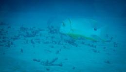 Tubbataha Reef Philippines