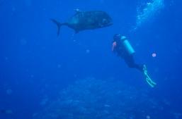 Giant Trevally and Jeff - Tubbataha Reef Philippines