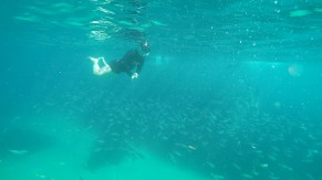 Amazing vis - Manly to Shelly Swim