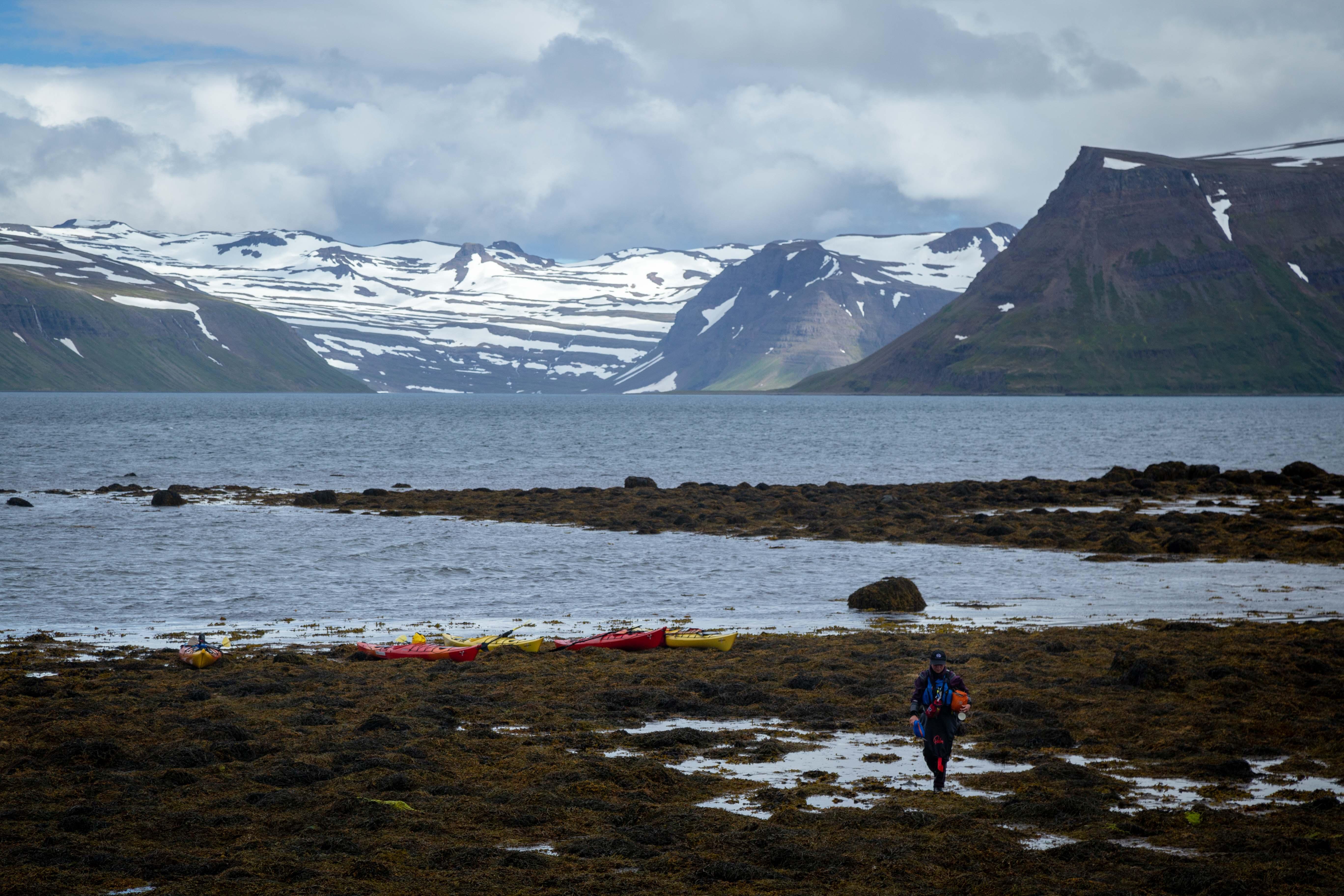 Coastal kayaking adventure Westfjords Iceland
